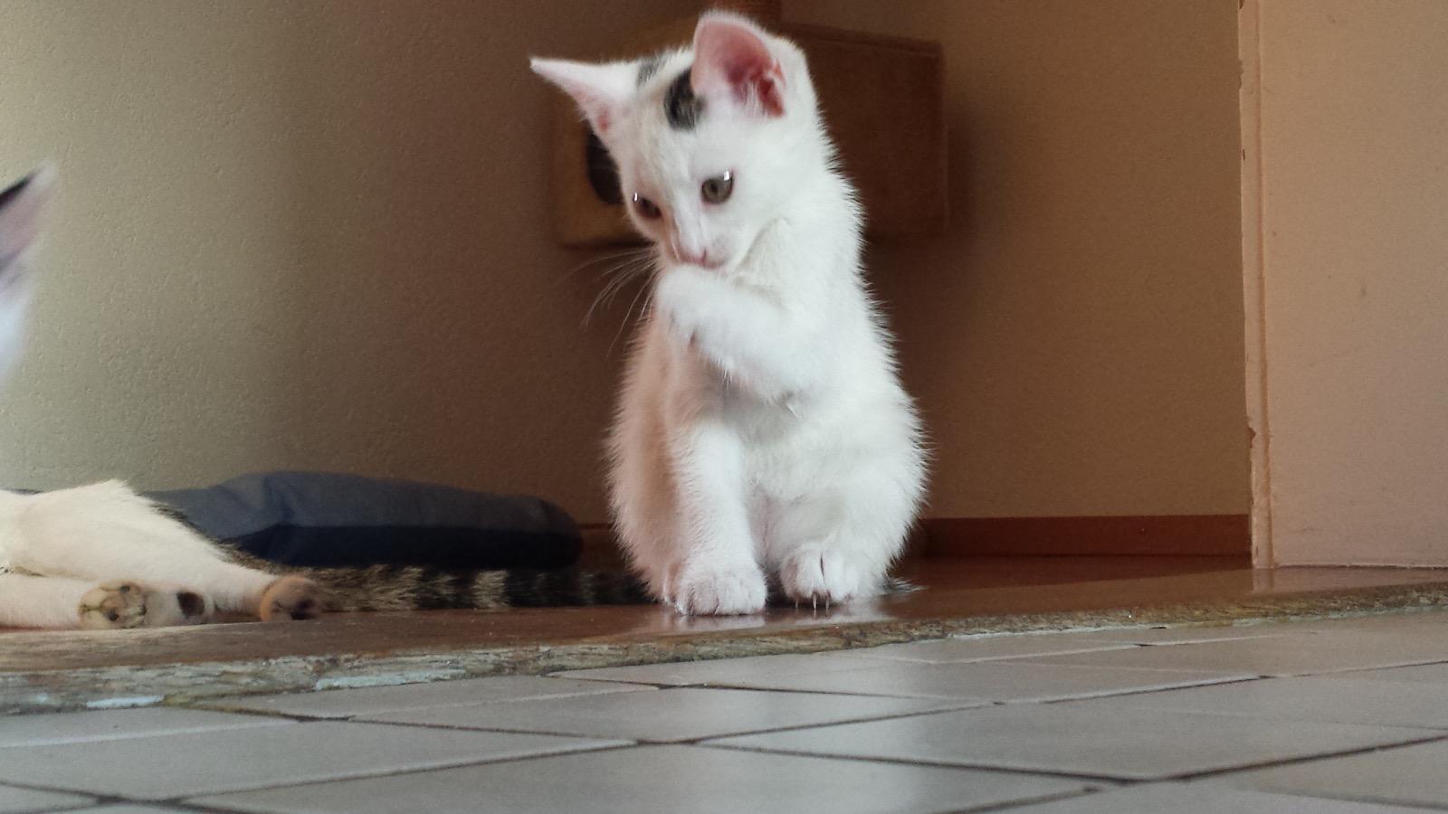 Wir füttern und versorgen Ihre Katzen und andere Haustiere - Tierheim Alternative
